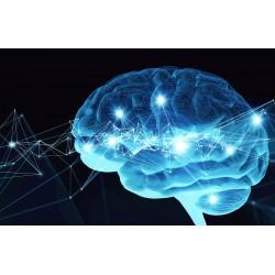 Diploma in Neurotology
